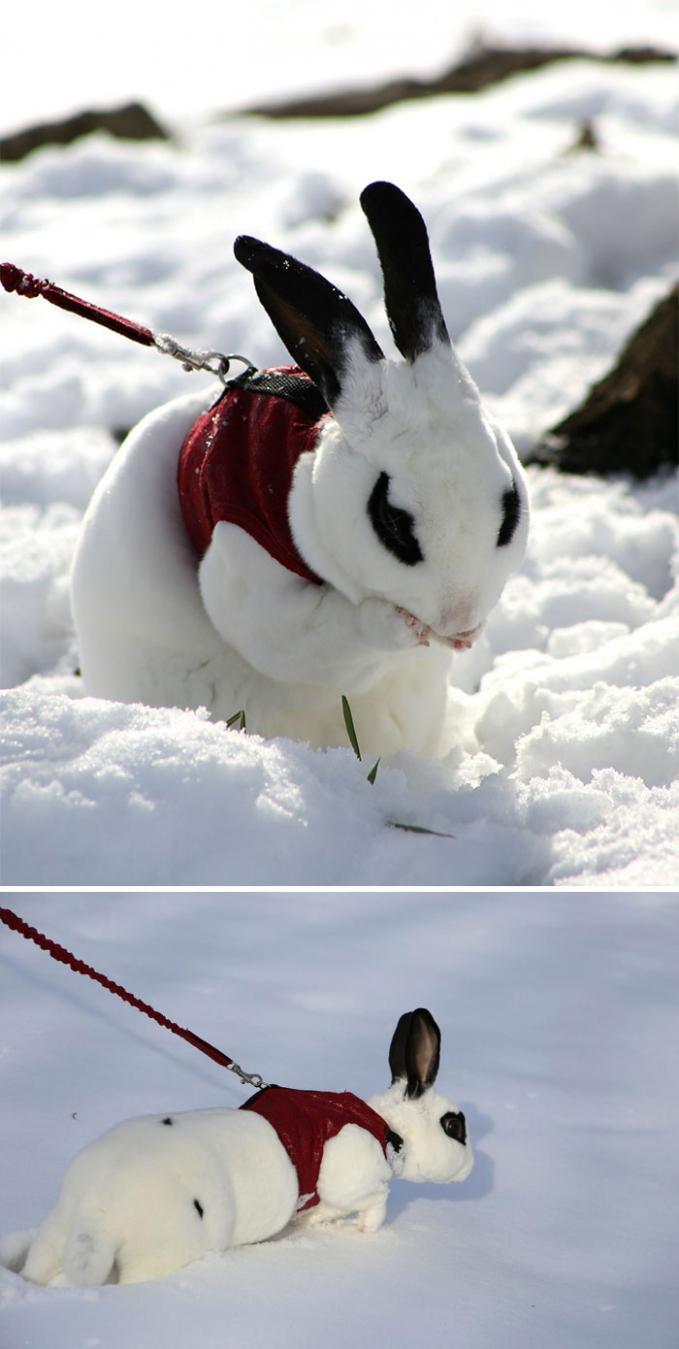 Sama halnya seperti yang dirasakan kelinci lucu ini Pulsker. Apapun namanya yang pertama pasti kaget ya Pulsker. Seperti dirasakan hewan-hewan diatas. Kalau ekspresi kalian gimana pas pertama kali ngeliat salju?.