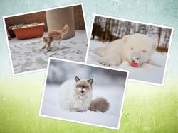 Ekspresi Lucu Hewan Saat Pertama Kali Melihat Salju, Menggemaskan !