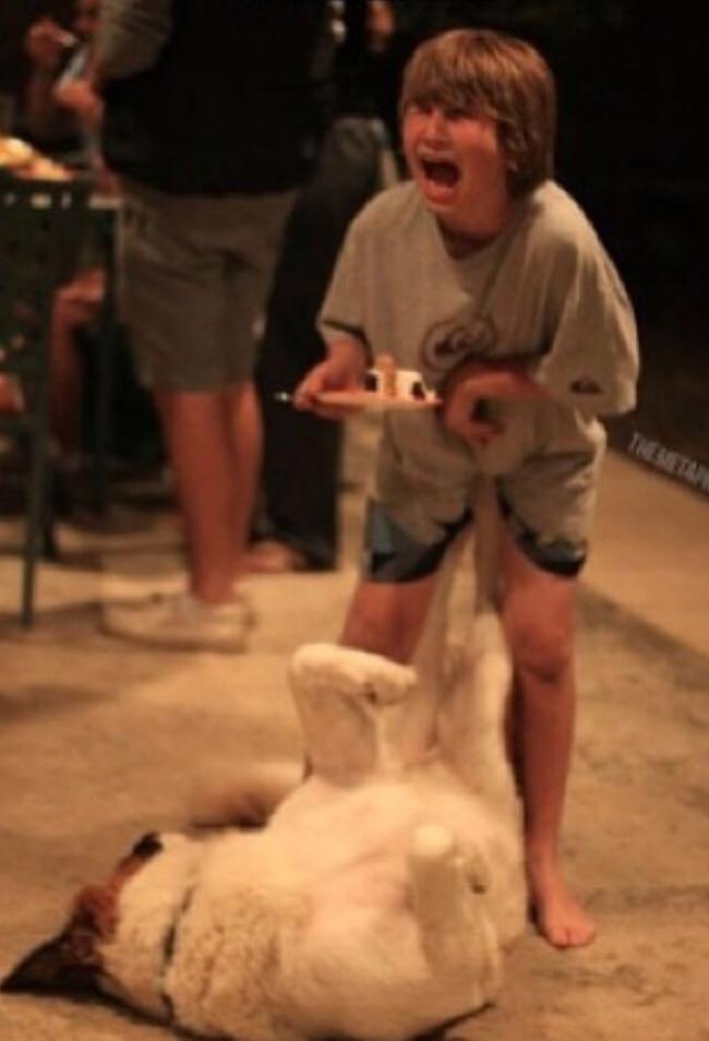 Si anjingnya dendam banget tuh kayaknya gara-gara nggak dibagi kuenya sama sang pemilik.