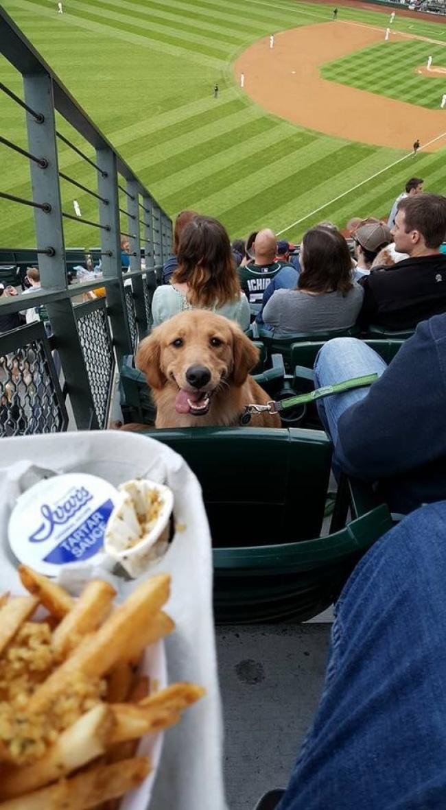 Awas aja kalau si anjingnya sampai nyamperin dan merebut jatah makanan pas enak-enak nonton pertandingan.