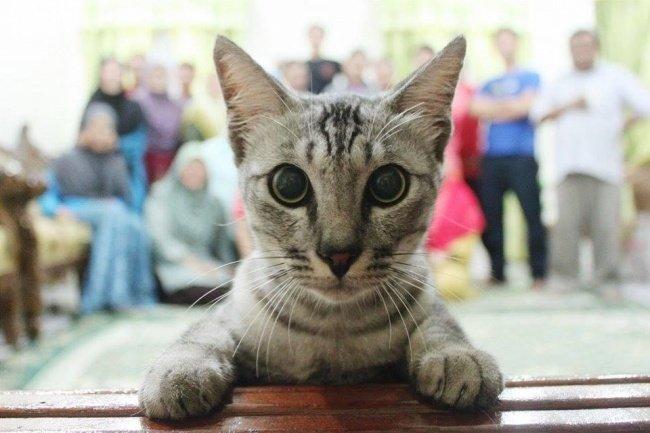 Sebenarnya kucing ini nggak berniat untuk merusak fotonya, karena sepertinya dia lebih tertarik dengan kamera yang ada di depannya.