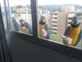 Foto Hewan yang Tertangkap Kamera Lagi Mampir di Jendela Kantor