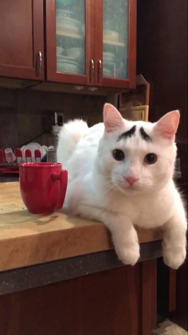 Walau sedikit, si kucing punya alis yang cetar membahana. Nggak mau kalah sama Syahrini lho.