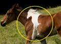 8 Hewan yang Terlahir dengan Motif Bulu Unik, Jadi Pengen Punya Ya?