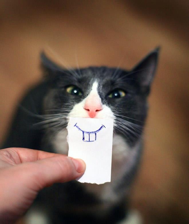 Kucing bergigi kelinci nih ceritanya Pulsker.