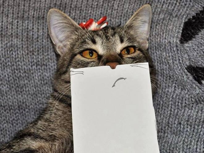 Sinis amat sih cing, kucing. Ntar nggak dapat jatah ikan asin lho.