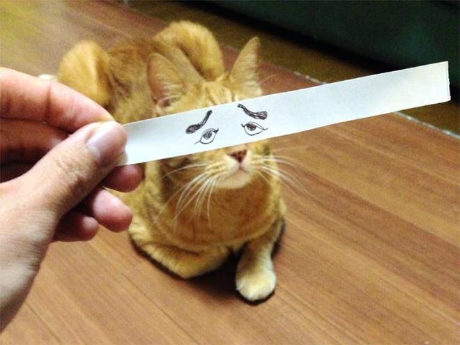 Wow, rupanya si kucing ngefans banget sama Syahrini sampai-sampai alisnya dibikin cetar membahana gitu.