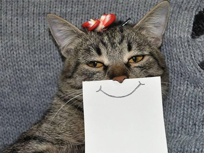 Makin lucu kan Pulsker?. Gimana, mau nyobain foto kayak gini juga nggak nih sama kucing peliharaan dirumah biar makin lucu?.