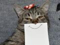 Foto dengan Gambar Mulut Lucu, 8 Kucing Ini Terlihat Makin Menggemaskan
