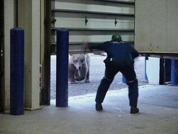 Karena persediaan makanan di alam liar menipis, si beruang terpaksa deh masuk kota dan bikin gempar orang-orang disekitarnya.