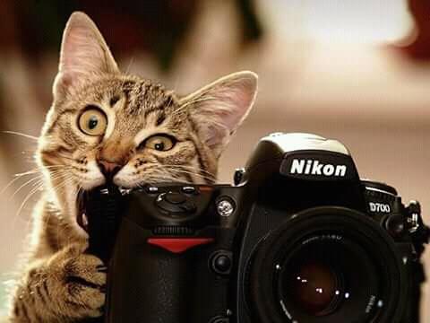 Wah, lapar apa gimana nih si kucing sampai-sampai kamera mau diembat juga?.