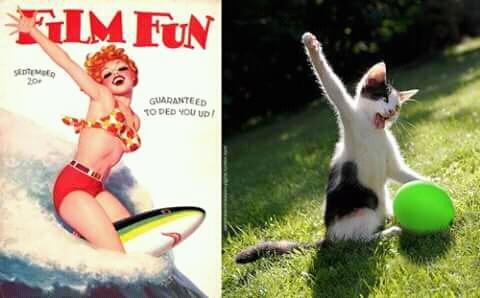 Karena si kucing takut foto di air jadi fotonya di rumput aja ya.