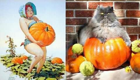 Lebih lucu mana si kucing apa modelnya nih?.