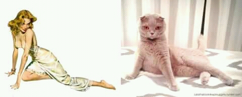 Mencoba meniru semirip mungkin sama model sebenarnya. Gimana guys, lucu-lucu kan pose kucingnya saat meniru modelnya?. Saking gemesnya jadi pengen bawa pulang deh.