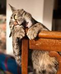 Dibalik Tingkahnya yang Lucu, Seperti Ini Ekspresi Kucing Pas Lagi Ngambek