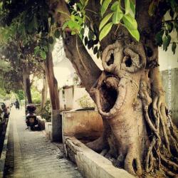Aneh bin Ajaib, 7 Pohon Ini Punya Bentuk Mirip Manusia dan Hewan