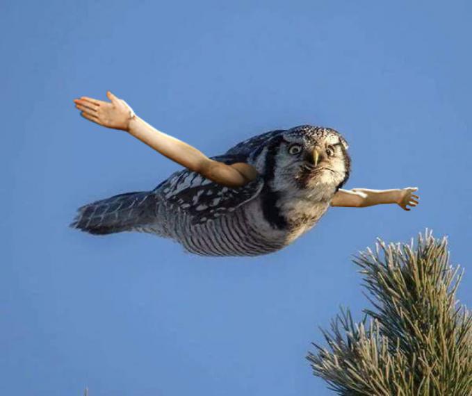Terbang tinggi dan rasakan sensasinya saat angin menerpamu secara perlahan. Tapi kalau ada angin ribut mending minggir deh.