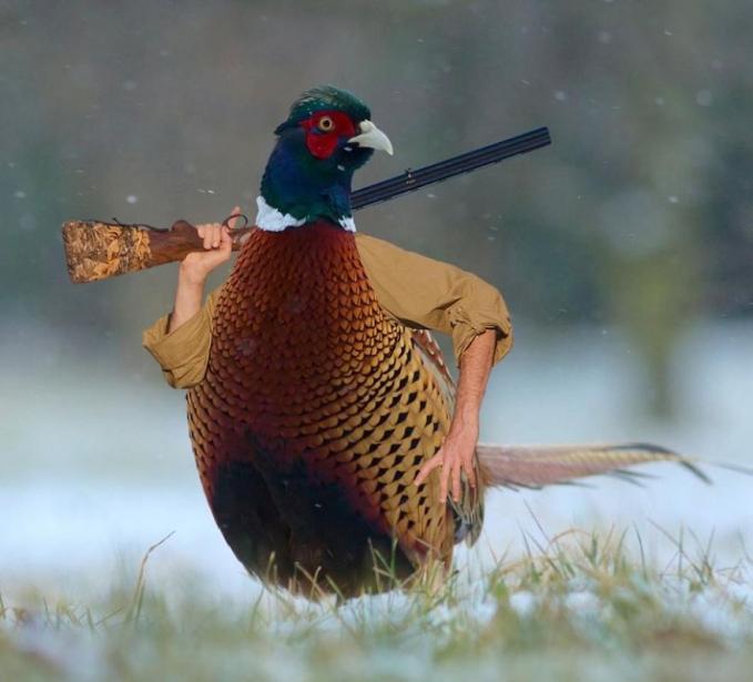 Yang kemarin nembakin burung, sekarang gantian si burung mau bikin pembalasan tuh. Keren nggak Pulsker kalau seandainya burung punya tangan seperti manusia?.