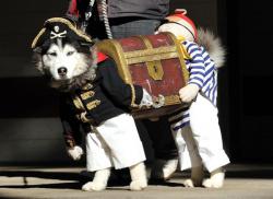Mengintip Kelucuan Para Anjing Saat Pesta Kostum, Imut Banget