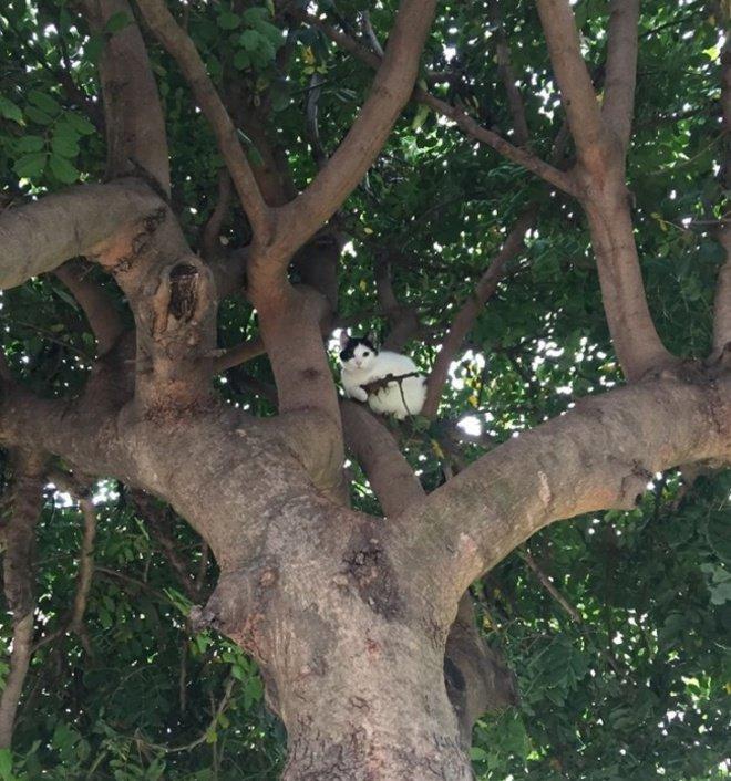 Hati-hati, ada kucing di atas pohon yang sedang mengawasimu sambil membawa senapan. Lucu banget ya, padahal itu hanya ranting pohon lho.