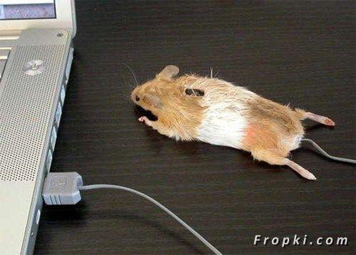 Kalau ini baru mouse atau tetikus beneran Pulsker karena bentuknya memang menyerupai tikus beneran.
