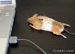 7 Bentuk Mouse Komputer Unik dan Tak Biasa, Oke Punya Nih !