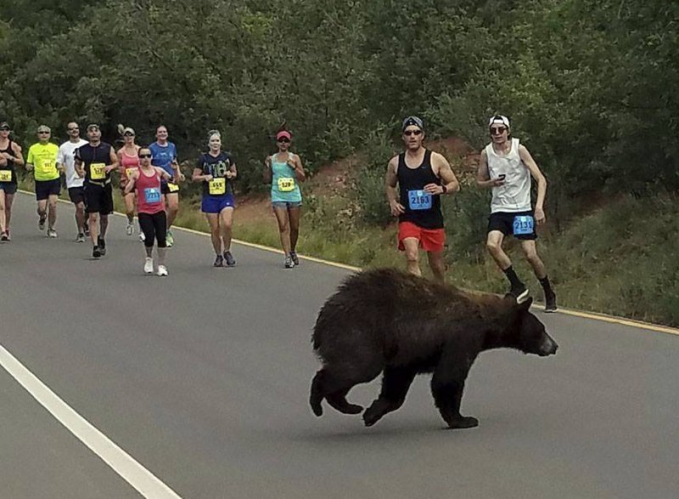 Pertandingan lari di Colorado tiba-tiba terhenti karena seekor beruang yang muncul dari hutan. Para peserta hari ini kaget melihat binatang ini melintas didepan mereka.
