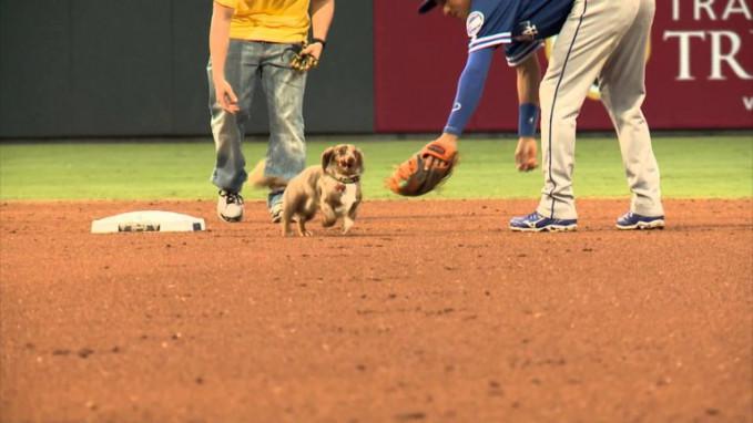 Walaupun ini anjing lucu tapi tiba-tiba anjing ini masuk ke lapangan bisbol. Soundtrack para pemain dan penonton tiba-tiba heboh dengan kehadiran anjing kecil itu.