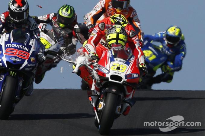 Bukan hanya superbike aja tapi pertandingan balap MotoGP di Phillip Island Australia tahun 2015, tiba-tiba kedatangan tamu tak diundang yaitu seekor pelikan yang terbang melintas dan tertabrak oleh Andrea iannone.