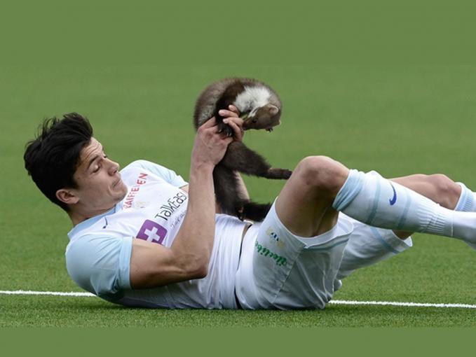 Seekor tupai juga pernah muncul saat pertandingan sepak bola. Dan seorang pemain malah terkena gigitan Si Tupai ketika berniat menyingkirkannya.