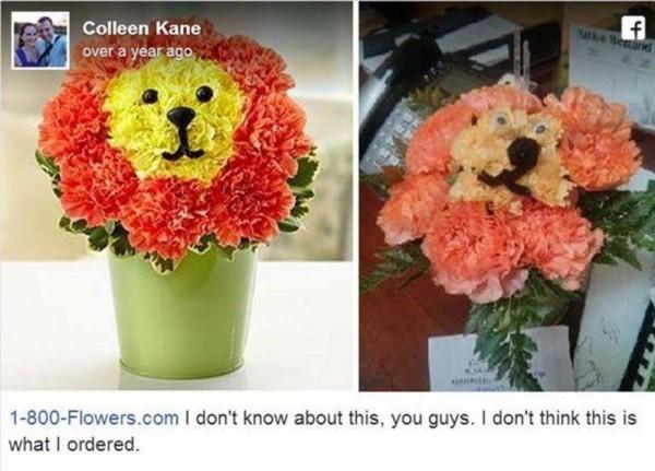 Lain kali jangan pernah beli bunga secara online ya, kalau nggak mau kayak gini jadinya.