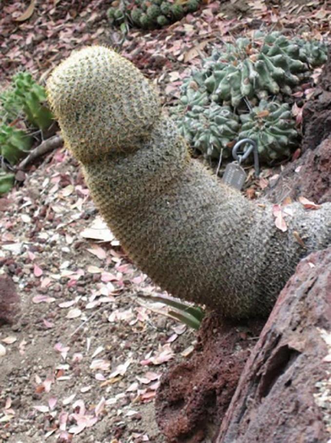Ehh..ada lagi. Tapi ini cuma kaktus kok, Pulsker.