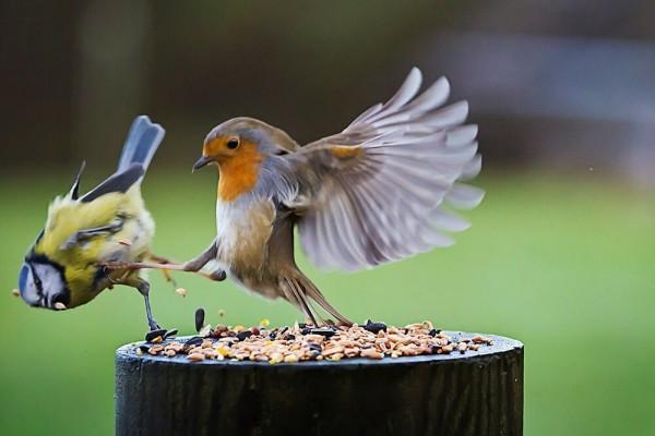 """""""Pergi sana, ini sekarang jadi makanan gue!"""". Emang kalau masalah perut hewan juga nggak bisa santai,"""