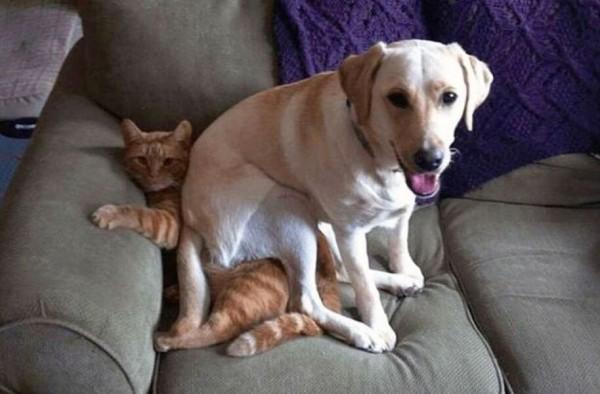 """Yang anjing ini pikirkan, """" kursi ternyaman di dunia"""""""