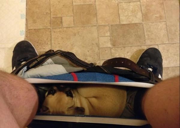 Saat kamu memakai celana ternyata ada anjing yang tertidur nyenyak di dalam celanamu.