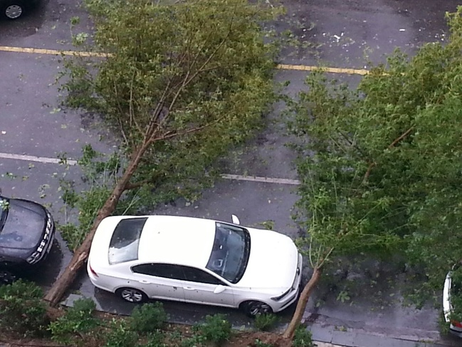 Tepat diantara pohon yang tumbang, beberapa sentimeter lagi sih sebenarnya bisa hancur mobilnya.