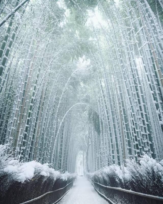 Hutan bambu yang indah.