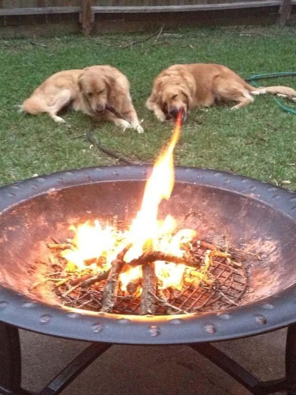 Anjing makan api? Sakti banget ya!