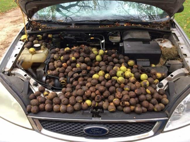 Mobil ini sudah lama nggak terpakai. Dan ternyata, tupai memanfaatkanya menjadi banker makanan.