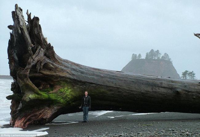 Seorang fotografer menemukan pohon tumbang yang sangat besar. Dan ia meengabadikannya dengan bidikan kamera.