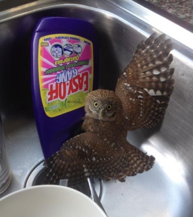 Kaget banget kan, ketika bangum tidur kamu menemukan burung hantu yang sedang cuci piring di wastafelmu.