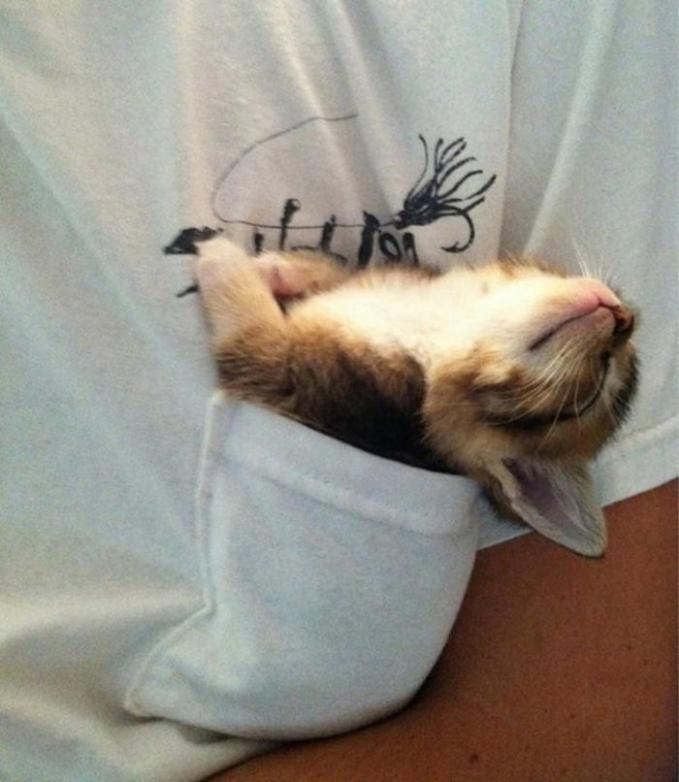 Anak kucingnya pas banget di kantong saku, jadi bisa dibawa kemana-mana bahkan saat tidur.