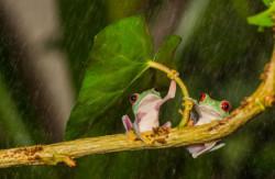 Foto Menakjubkan Saat Hewan Menggunakan Payung Alami Dikala Hujan