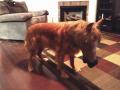 Lucu dan Bikin Bingung, Begini Ekspresi Saat Anjing Pakai Topeng Kuda