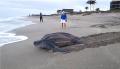 Kumpulan Benda Aneh sampai Menakjubkan yang Pernah Ditemukan di Pantai