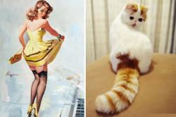 Menggemaskan! 9 Foto Kucing Yang Menirukan Gaya Model Di Poster Ini Nggak Kalah Menarik Dengan Modelnya