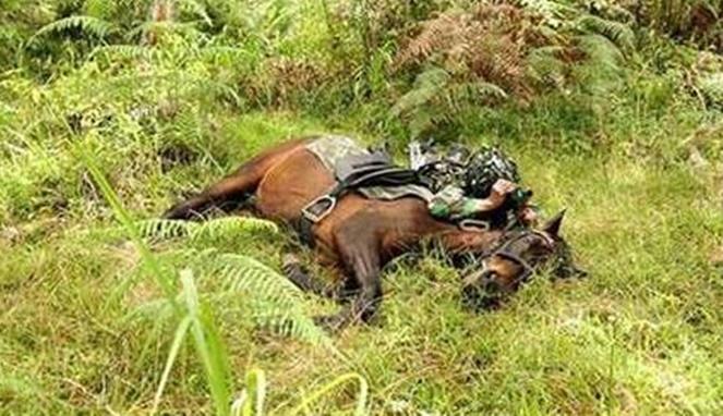 Wah, kudanya juga ikut-ikutan sembunyi tuh Pulsker ngikutin tentaranya.