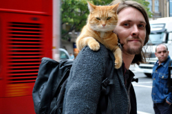 7 Alasan Cowok Pecinta Kucing Adalah Pasangan Idaman