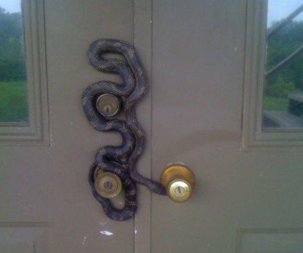 Ngeri banget nggak sih, ada ular melingkar ketika kamu mau buka pintu?