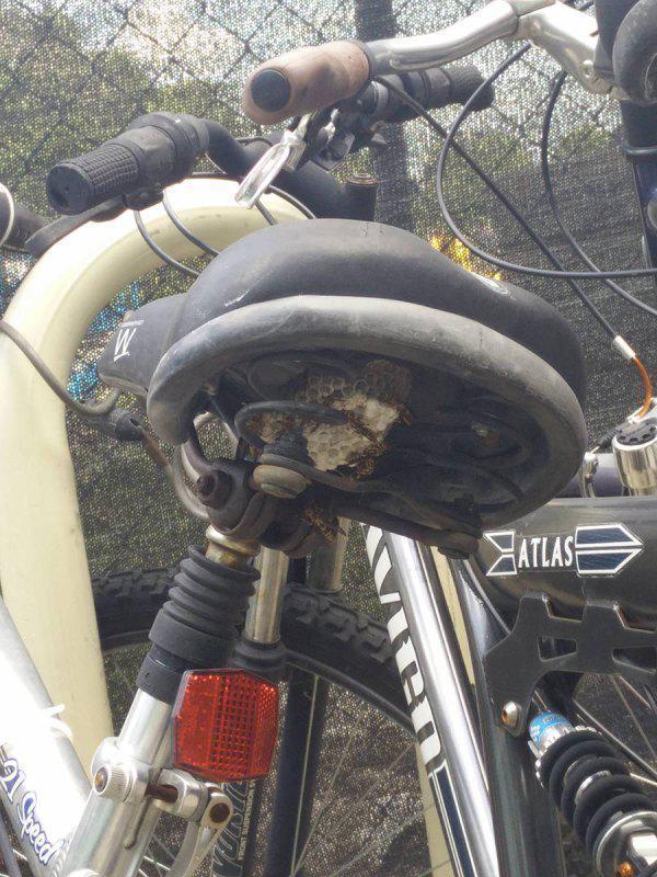 Mungkin sepeda ini sudah lama sekali nggak digunakan, sampai-sampai dihuni oleh sarang tawon.
